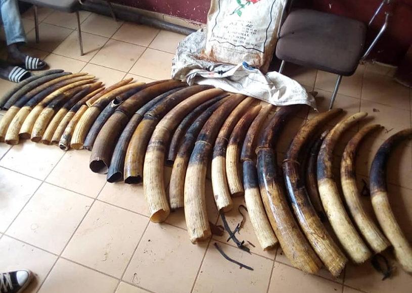 Conservation Justice a maintenu ses activités au Gabon tout au long de l'année 2019