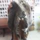 6 présumés trafiquants de faune arrêtés en août 2020