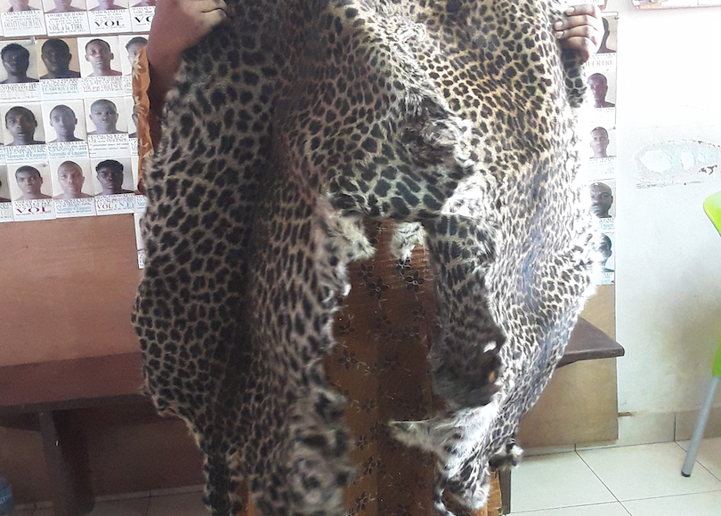 6 wildlife smugglers arrested in August 2020
