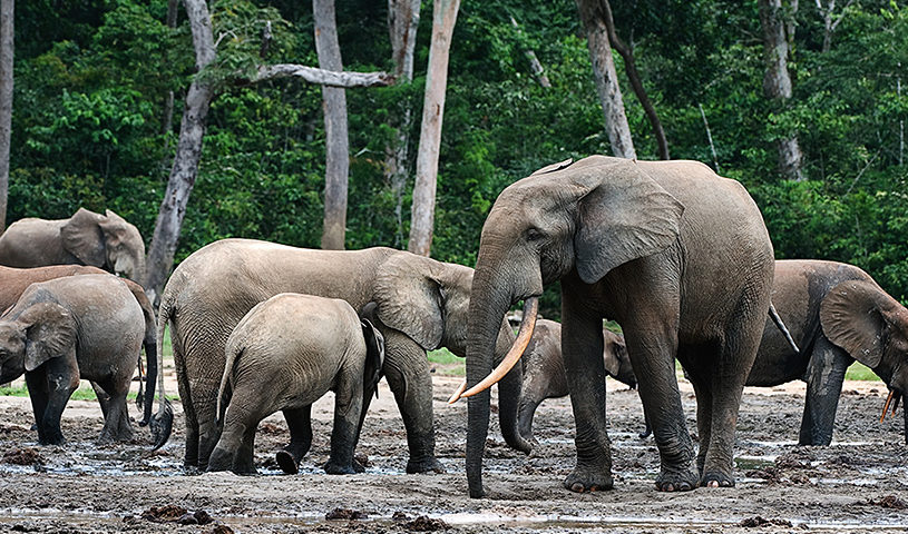 47 wildlife smugglers arrested in Gabon thanks to Conservation Justice in 2020